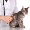 Ветеринарные клиники в Бее